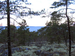 View over forest, pine.