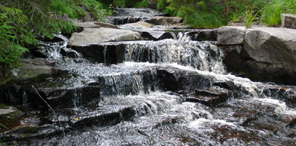 Small waterfall over stones in forest. Photo.
