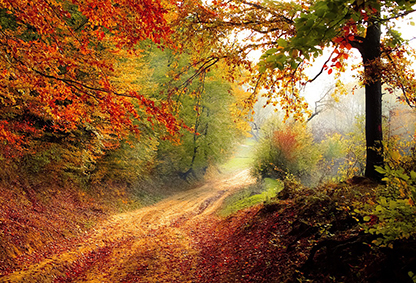 Forest during autumn. Photo.