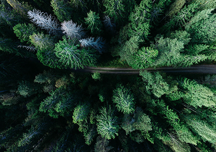Forest seen from above. Photo.