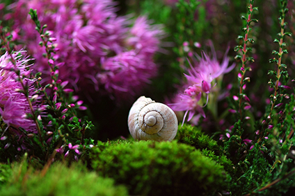 Shell laying on moss with purple flowers in background. Photo.