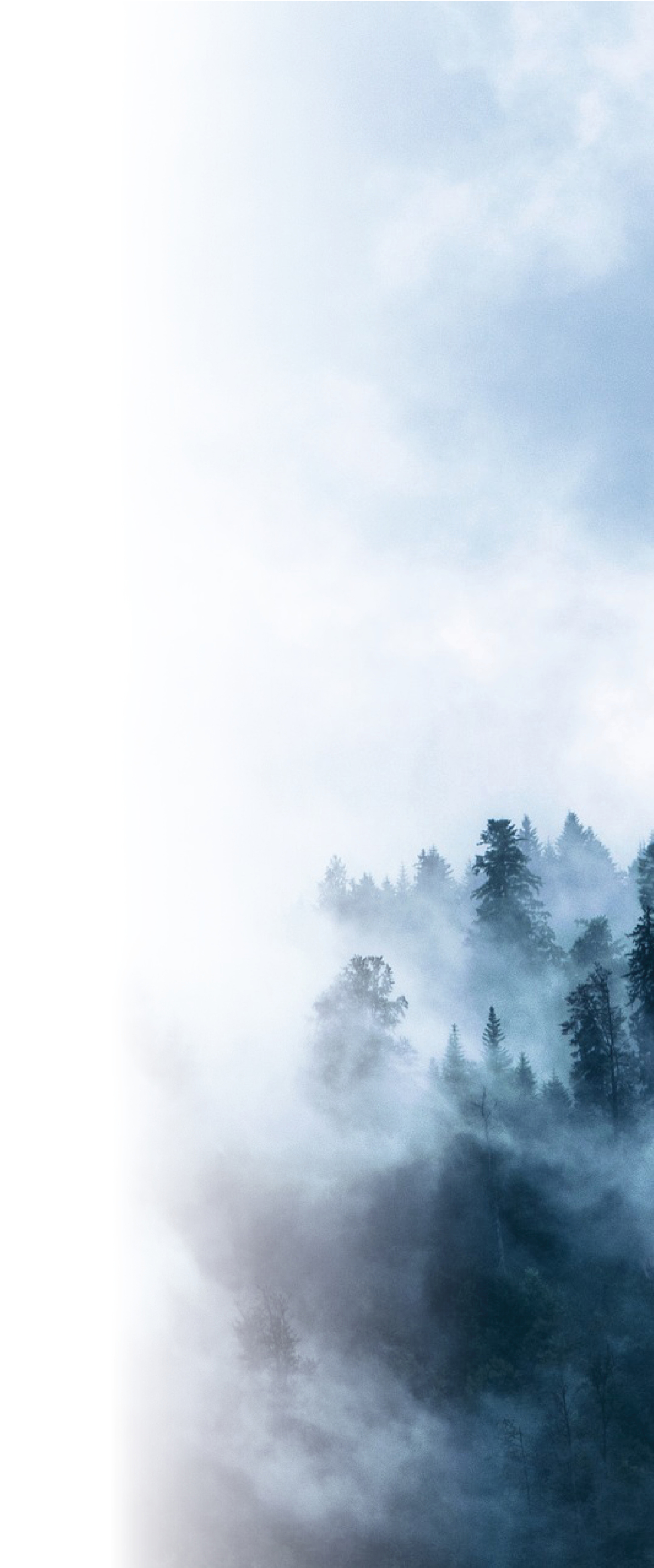 Cloudy sky and misty forest. Photo.