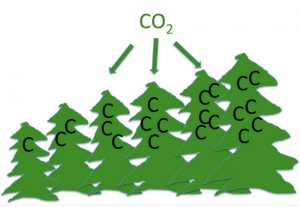 """CO2"" pointing at green fir-trees with the letter ""C"" painted on them. Illustration."