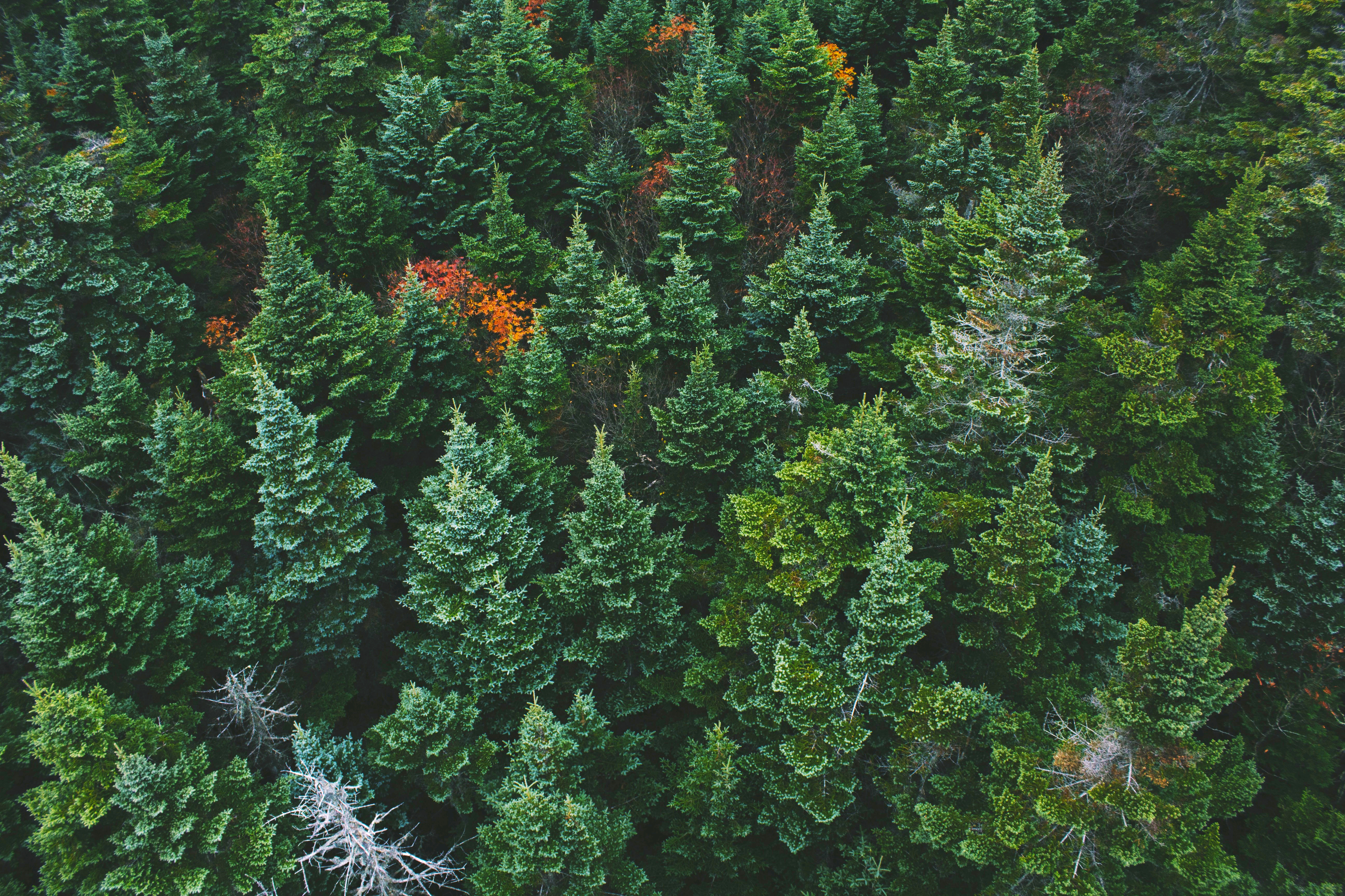 Green forest from above. Photo.