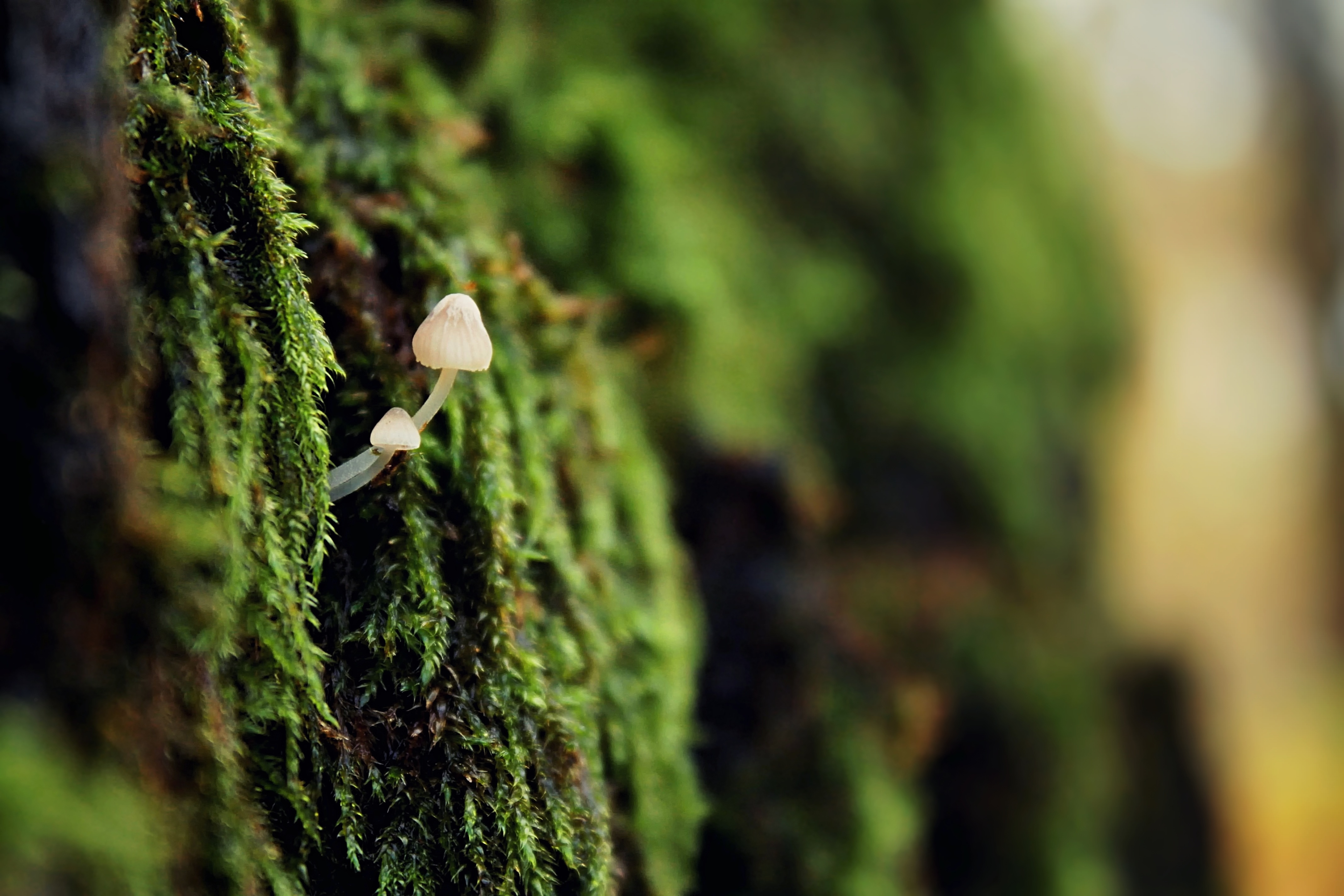Close up on mushroom groing in moss. Photo.