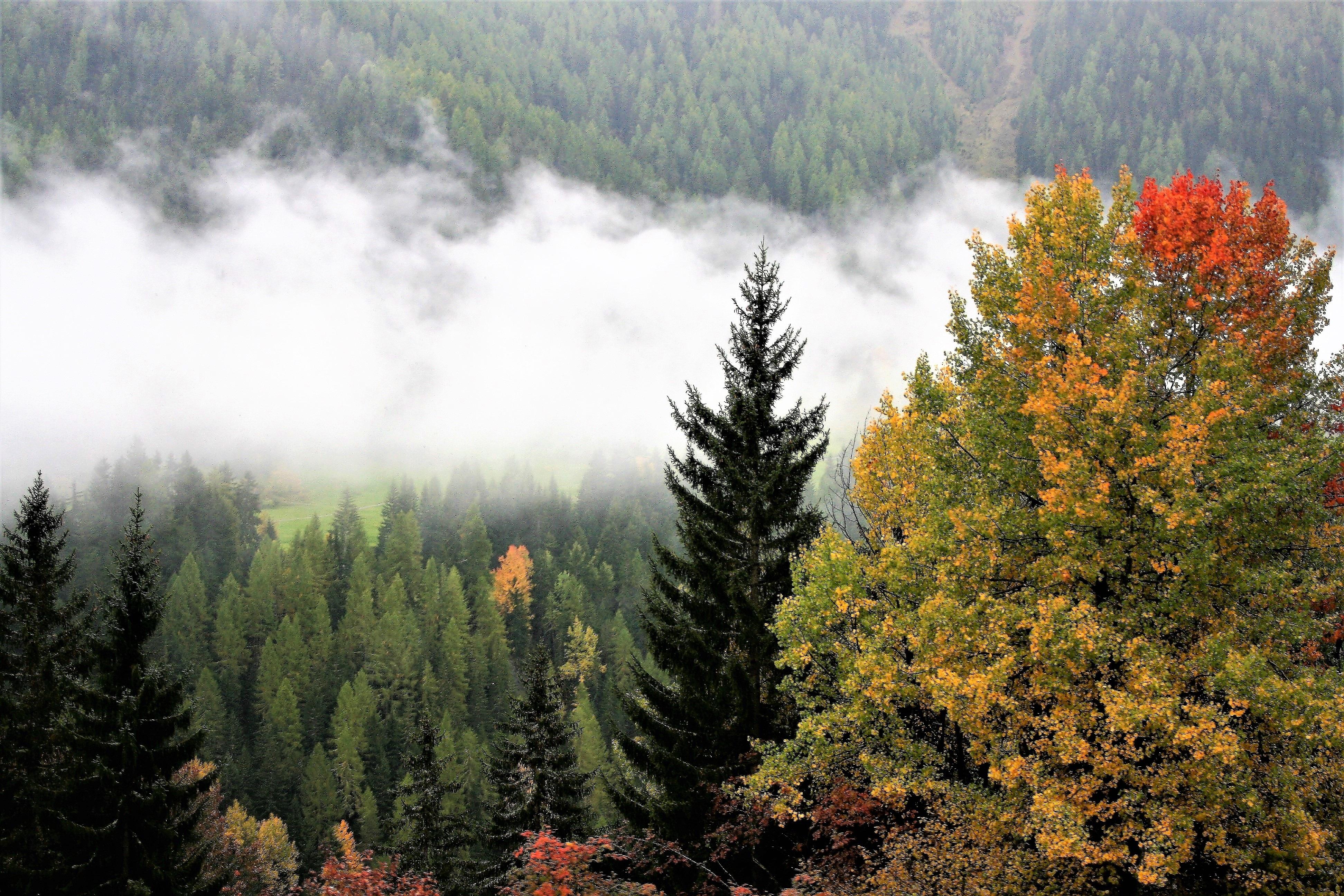 Misty forest. Photo.
