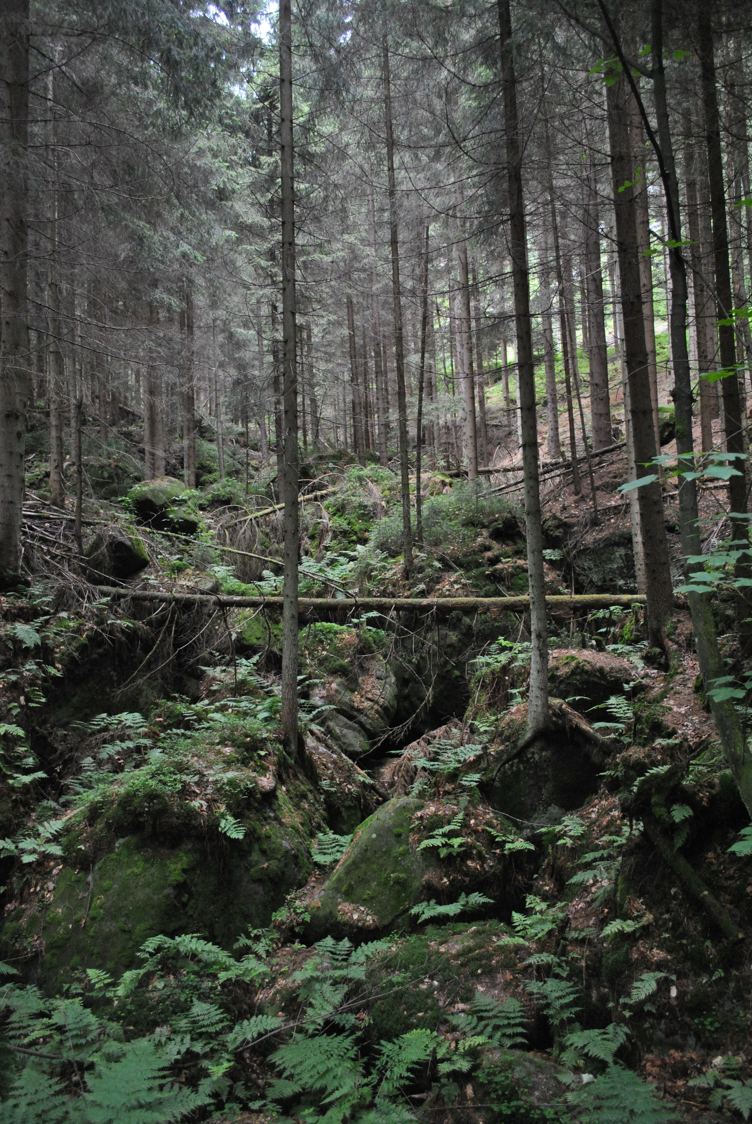Forest uphill. Photo.