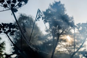 Spiderweb in foreground, trees and sun i background. Photo.