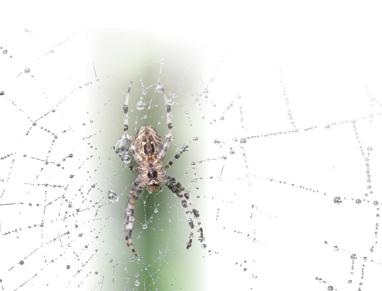 Close up on spider in spiderweb. Photo.