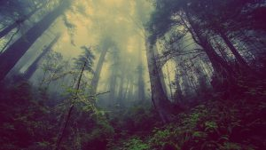 View of misty forest. Photo.