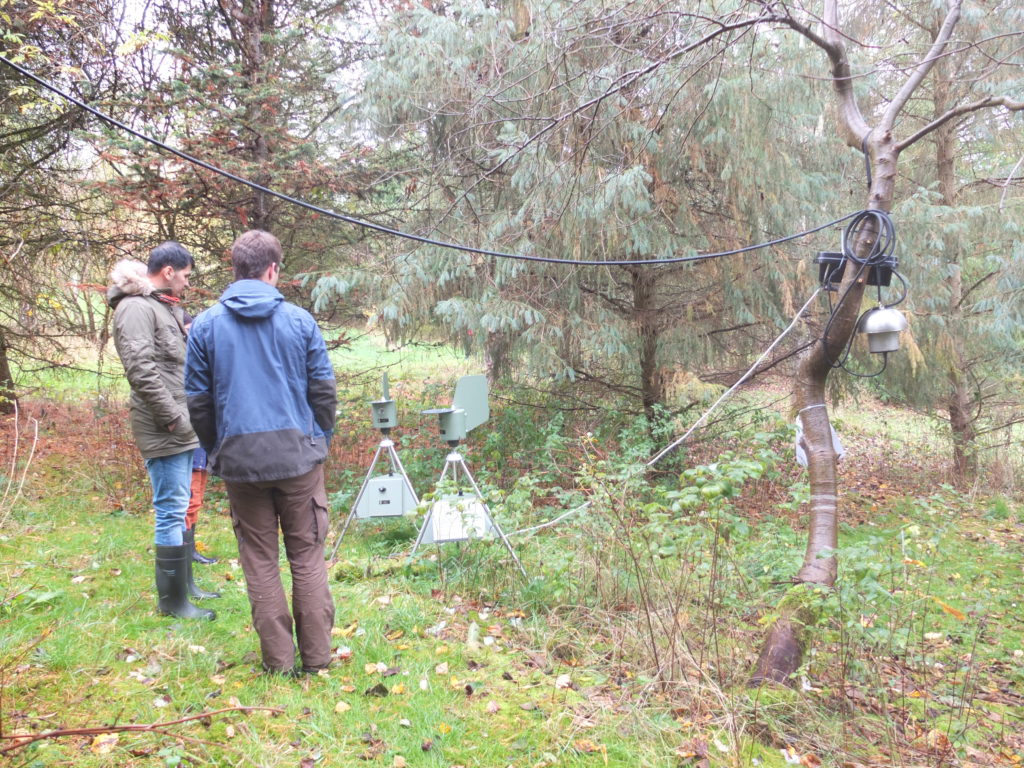 Two men looking at spore traps in forest. Photo.