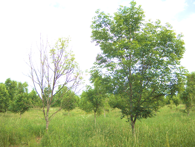 Trees in high grass. Photo.