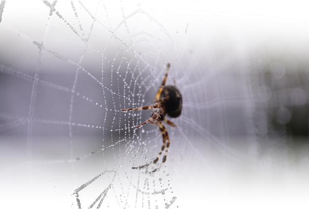 Close up on spider in spiderwebb. Photo.