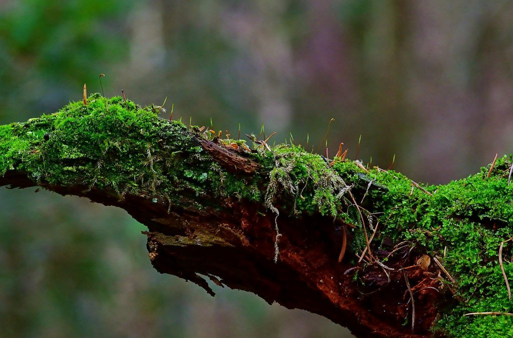 Close-up of branch covered with moss. Photo.