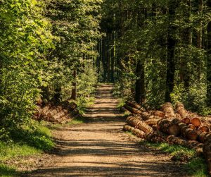 Small road in green forest. Photo.