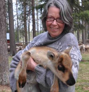 Woman holding a reindeer calf. Photo.