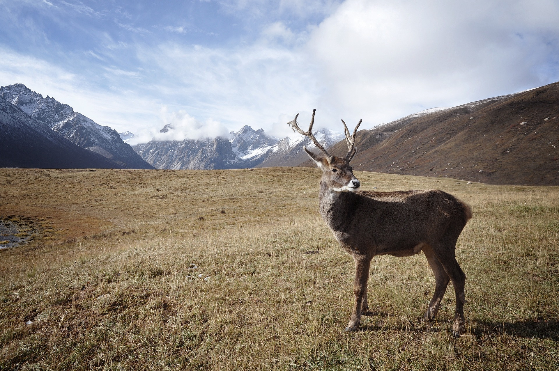Researchers matchmaking: reindeer husbandry in focus