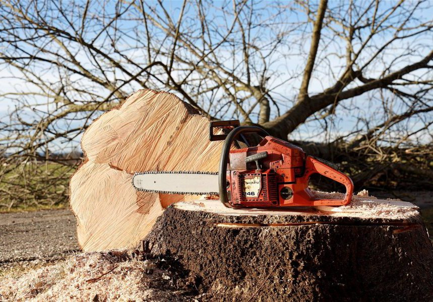 Chainsaw on a stump, felled tree in the background. Photo.
