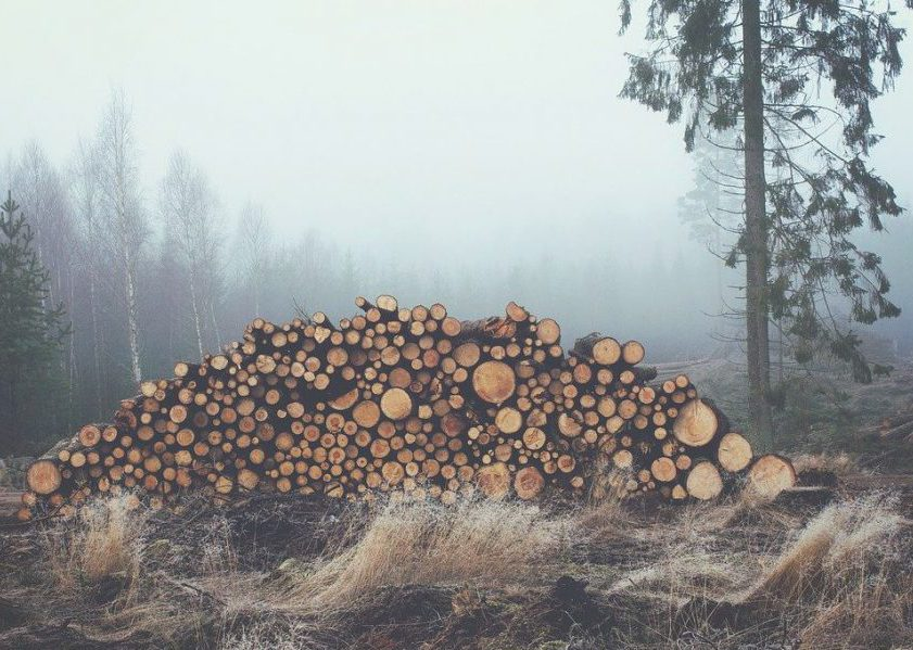 timber in fog, autumn/winter weather. Photo.