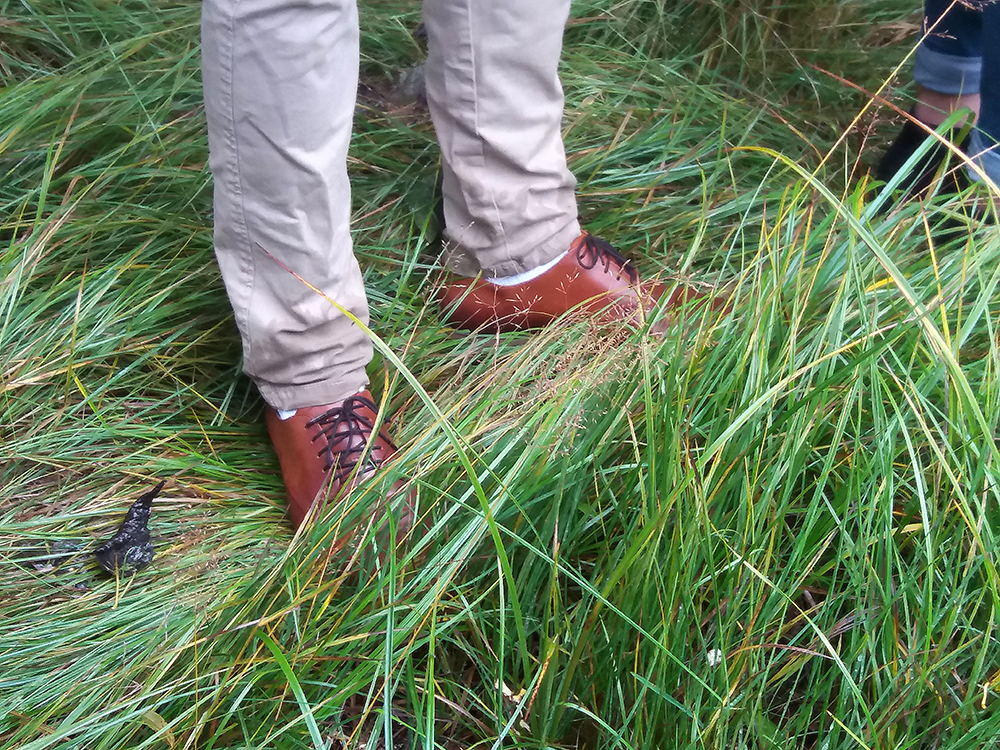 Close up on a pair of legs standing in high grass. Photo.